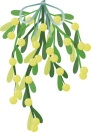 mistletoe2
