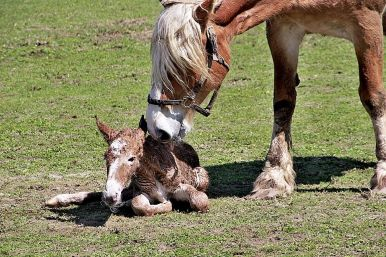 new-years-foal