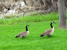 Clifton E. French Regional Park 006