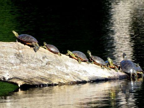 Hyland Park Reserve 008