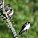 Hyland Park Reserve 016