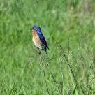 Hyland Park Reserve 034