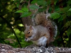 Hyland Park Reserve 112