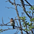 Hyland Park Reserve 149