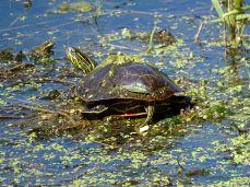 Hyland Park Reserve 163