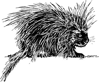 Porcupine for blog