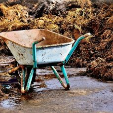disposing of manure