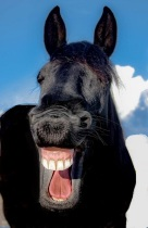 horselaugh 2