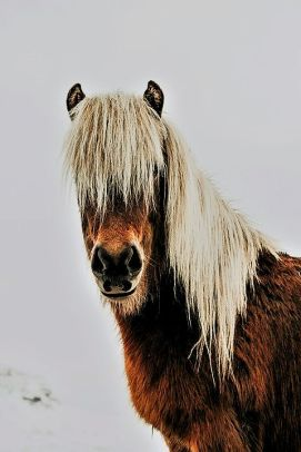 shaggy pony 2