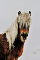 shaggy pony facing the other way