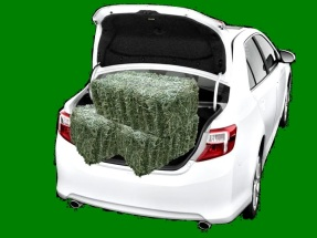 three bales of hay in trunk 2