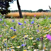 field of wildflowers