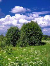 trees, wildflowers