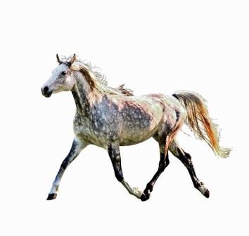 Anna's horse 2
