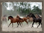 Horses galloping - framed