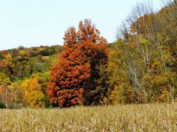 October Hike (11)