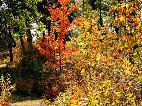 October hike (2)
