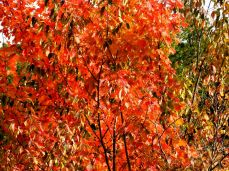 October hike (3)