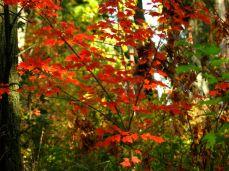 October hike (4)