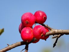 October Hike - berries 3