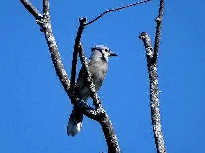 October Hike - Blue Jay