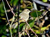 October Hike - Palm Warbler 2