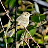 October Hike - Palm Warbler 2