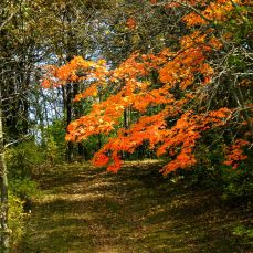 October Hike - trail to the lake 1