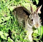 ...startled rabbit