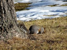 Squirrel near snow