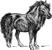 Pony from dream
