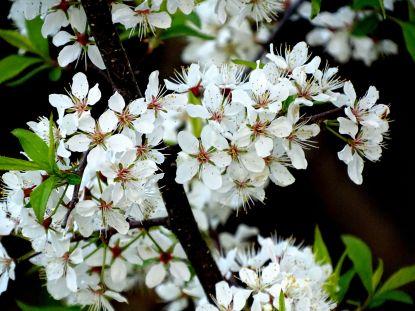 Flowers (1)