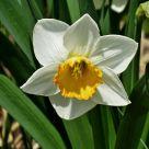 Flowers (11)