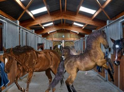 Horses in barn aisle
