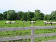First pasture