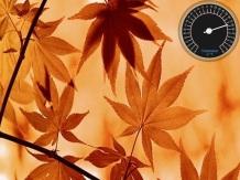 Comfortable autumn weather